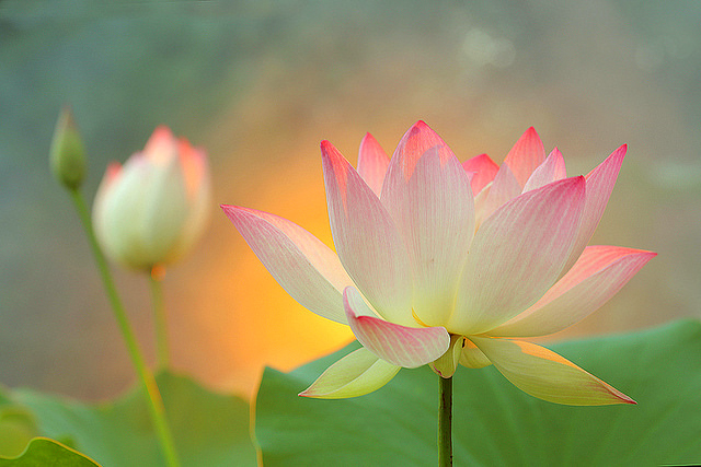 Blossom Background_ Vibrant